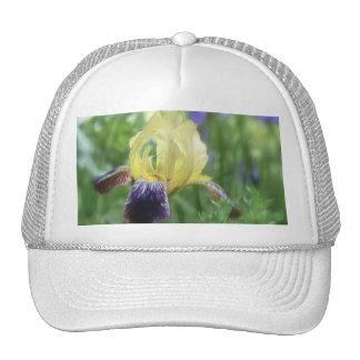 Iris histórico - púrpura y amarillo gorros