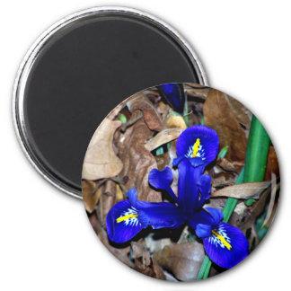 Iris holandés azul miniatura imán