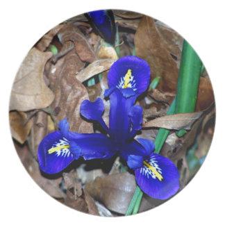 Iris holandés azul miniatura platos para fiestas