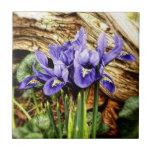 Iris holandés azulejos cerámicos
