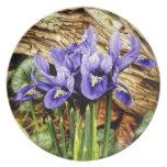 Iris holandés plato de comida