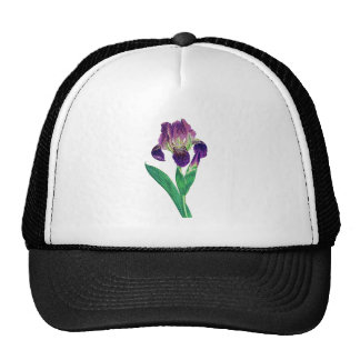 Iris holandés púrpura precioso gorro de camionero