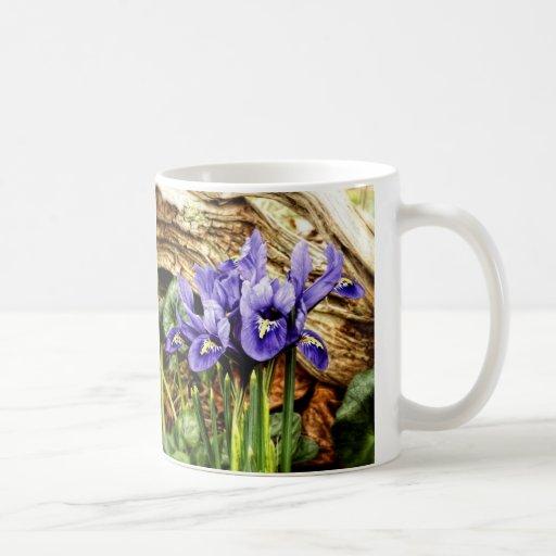Iris holandés taza
