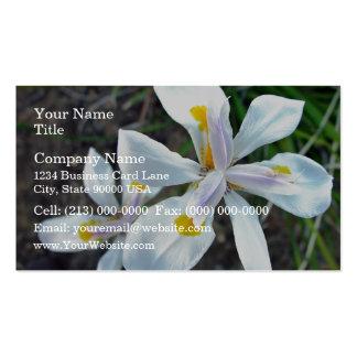 Iris holandeses blancos con la sombra rosada tarjetas de visita