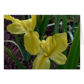 Iris imberbe amarillo de Luisiana Tarjeta De Felicitación