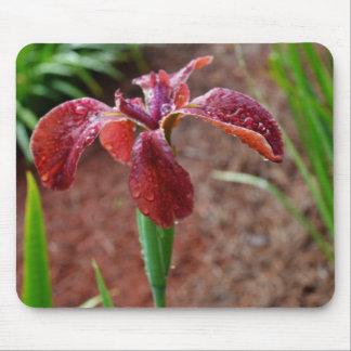 Iris imberbe coloreado moho alfombrilla de ratones