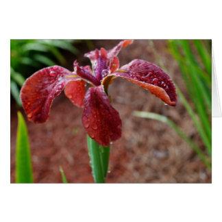 Iris imberbe coloreado moho tarjeta de felicitación