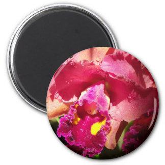 Iris imberbe macro imán redondo 5 cm