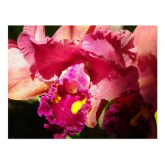 Iris imberbe macro tarjetas postales