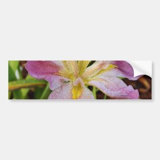Iris imberbe Rosado-Amarillo Pegatina Para Auto