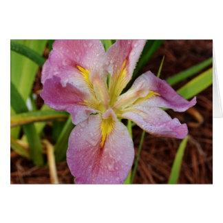 Iris imberbe Rosado-Amarillo Tarjeta De Felicitación