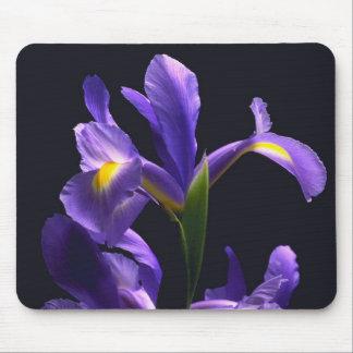 Iris impresionante, púrpura alfombrillas de ratón