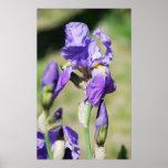 iris impresiones