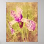 Iris In Pink Print