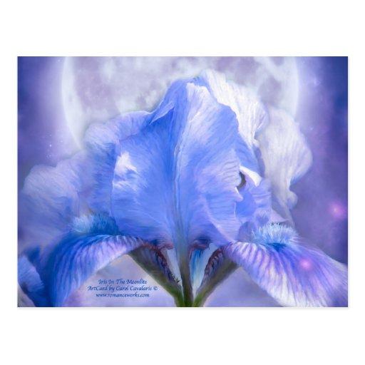 Iris In The Moonlite Art Postcard