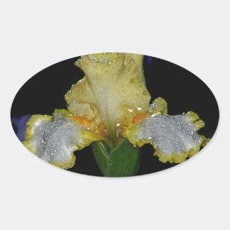 Iris In The Night Rain Oval Sticker