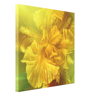 Iris inner beauty (warm yellow) art square canvas gallery wrapped canvas