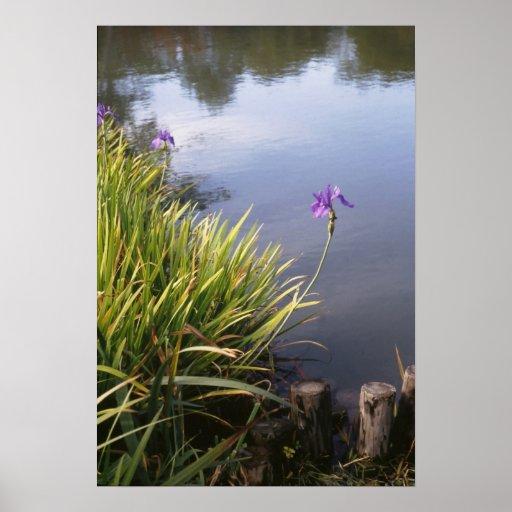 Iris, Japanese gardens Posters