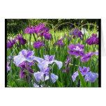 Iris japonés tarjetón