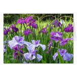 Iris japonés tarjeton
