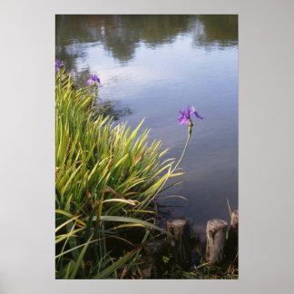 Iris, jardines japoneses póster