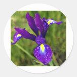 iris.jpg pegatinas redondas