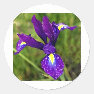 iris.jpg classic round sticker