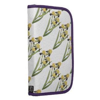 iris marrón-florecido (squalens del iris) por organizador