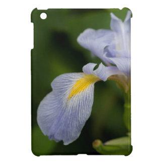 Iris meridional
