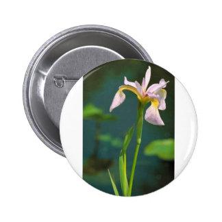 Iris meridional de la bandera azul pins