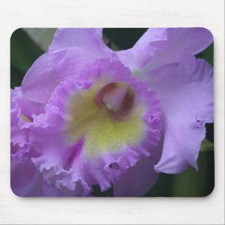 Iris Mousepad de Lavendar Tapetes De Ratón