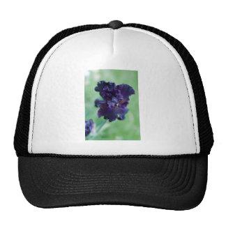 Iris negro gorras de camionero