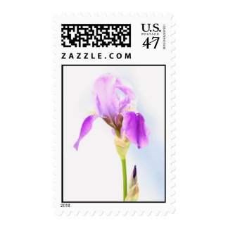 Iris on a Sunny Day Postage