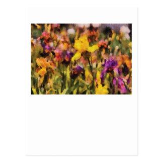 Iris - Orchestra Postcards