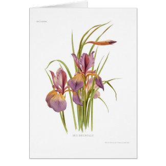 Iris orientalis card