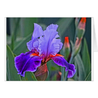 Iris Painting, Shades of Purple with Orange Accent Card