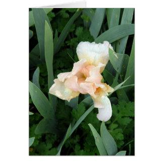 Iris pálido tarjetas