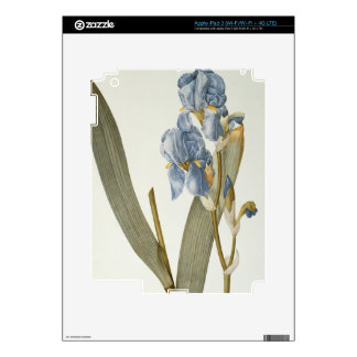 Iris Pallida, from `Les Liliacees', 1812 iPad 3 Decal