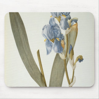 Iris Pallida, from `Les Liliacees', 1812 Mouse Pad