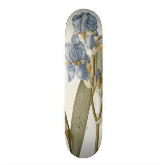 Iris Pallida, from `Les Liliacees', 1812 Skateboard