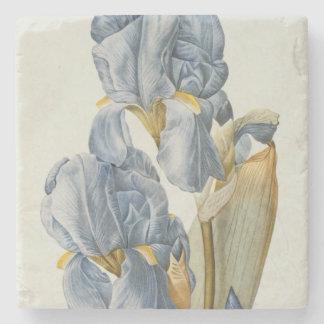 Iris Pallida, from `Les Liliacees', 1812 Stone Coaster
