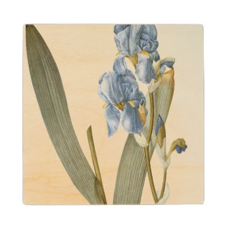 Iris Pallida, from `Les Liliacees', 1812 Wooden Coaster