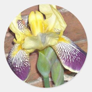 Iris Etiquetas Redondas