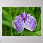 Iris pelado impresiones