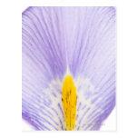 Iris petal post card