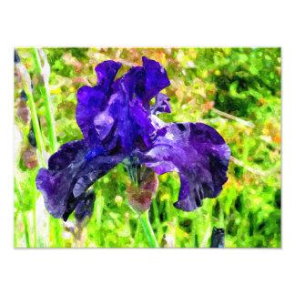 Iris Impresión Fotográfica