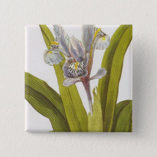 Iris Planifolia Button