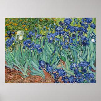 Iris por la impresión del poster de Van Gogh