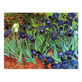 Iris por la postal de la bella arte de Van Gogh