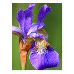 iris postal